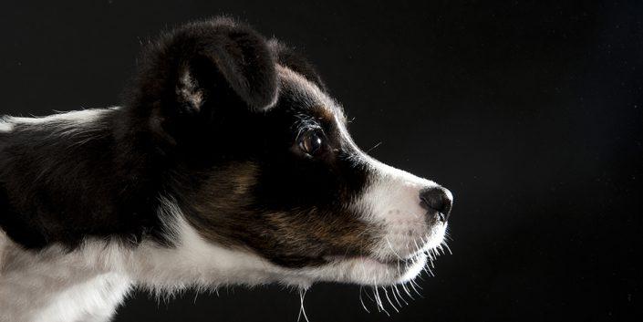 Fotografie-Sabine-Winkler-Tiere